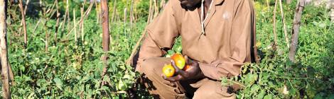 Plant Clinics Spread to help Ugandan Farmers