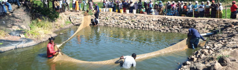 Fish Farming Changes Lives in Africa