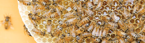 Ethiopian Entrepreneurs Turn to beekeeping