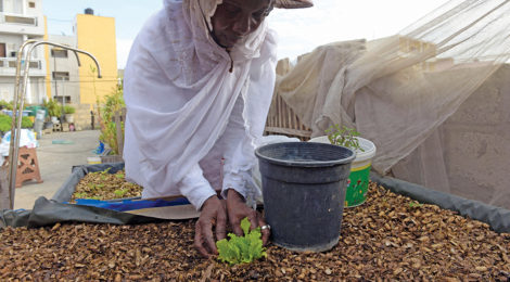 A High Point for Food Security in Senegal