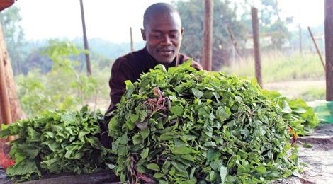Program Teaches Farmers How to Use  Fertilizer, Technology