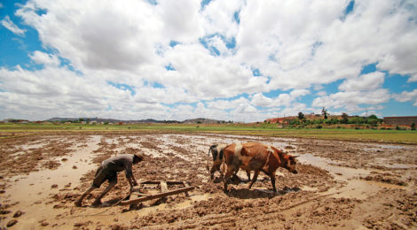 Madagascar Farmers Learn How to Beat Droughts