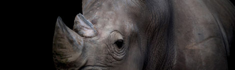 World Watches as Africa Tries to Stop Poachers